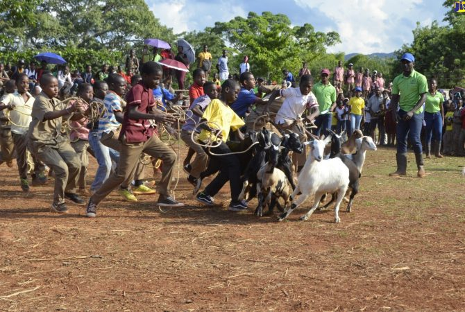 Students participate in a goat scramble at the Minard Livestock Show and Beef Festival at Minard Estate, Brown's Town, St. Ann, on November 8