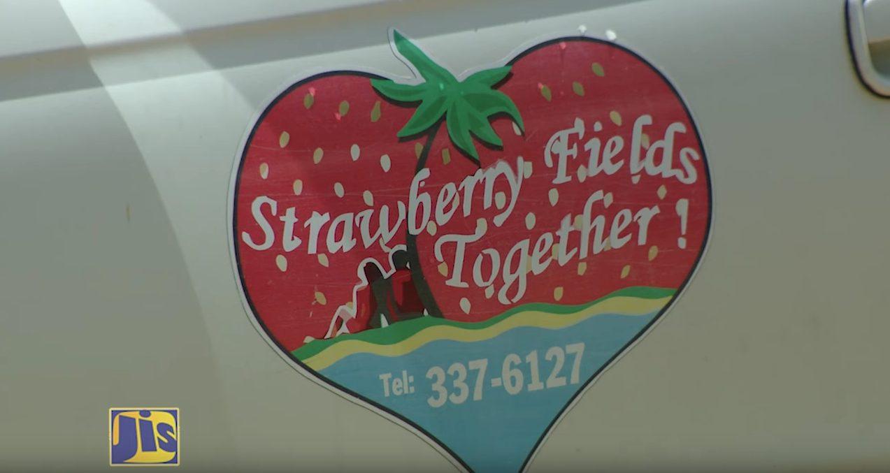 ROUN DI BEND Strawberry Fields of St Mary