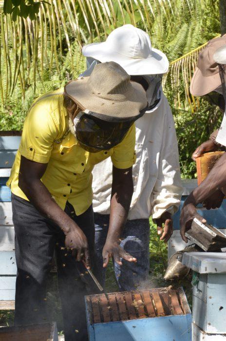 Beekeeping Big Business in the West - Jamaica Information