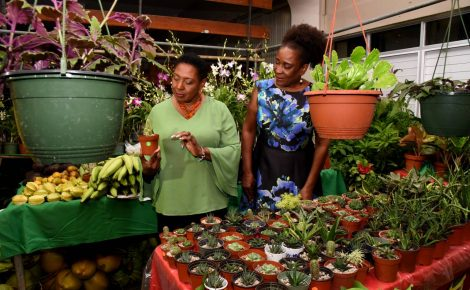 Minister of Culture, Gender, Entertainment and Sport, Hon. Olivia Grange (left), looks at a cactus on display during the official launch of the Health, Home and Garden exposition at the National Arena in Kingston on October 26. Looking on is Event Coordinator, Fay Wint. The Health, Home and Garden Expo 2017 will run from October 27 to October 29 at the National Arena