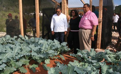 Minister of Science, Technology, Energy and Mining, Hon. Phillip Paulwell (left); Minister of Agriculture and Fisheries, Hon. Roger Clarke; and Managing Director, Jamaica Social Investment Fund (JSIF), Scarlett Gillings, look at broccoli plants during a tour of a greenhouse in Tobolski, St. Ann on Friday (Feb. 21), where the Water Catchment and Greenhouse Cluster Project, being implemented in St. Ann and Manchester, was officially launched. The $192 million project is being undertaken by JSIF and the JBI.