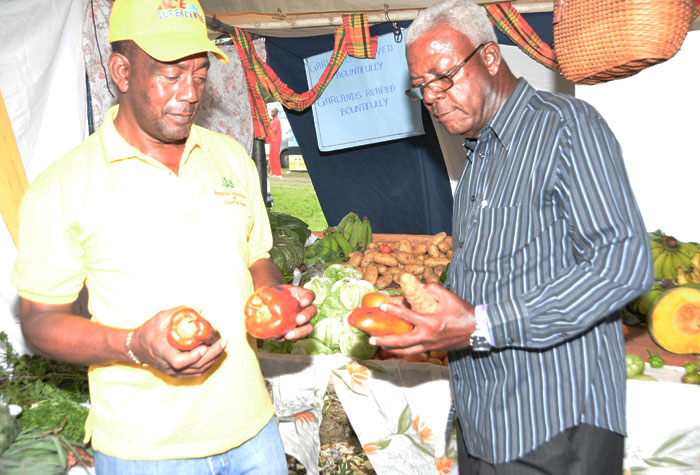 President of the St. James Associated Branch Societies of the  Jamaica Agricultural Society (JAS),  Councillor Glendon Harris (left) and Custos of St. James, Hon. Ewan Corrodus, examine some of the produce on display at the Montpelier Agricultural and Industrial Show, held  on April 21 in St. James.