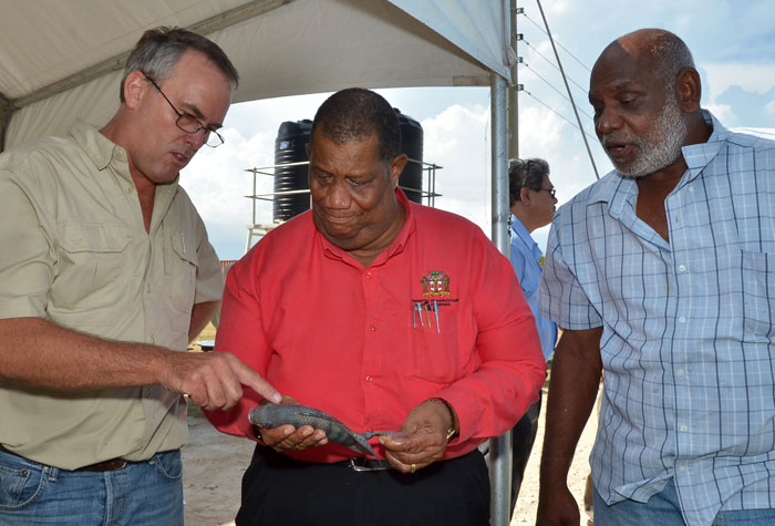 a business report on aquamarine farms ltd a corporation in the fish farming sector The feeder leader company is a family-owned and run business servicing the rural sector with  aquamarine, gold  corporation protomet was.