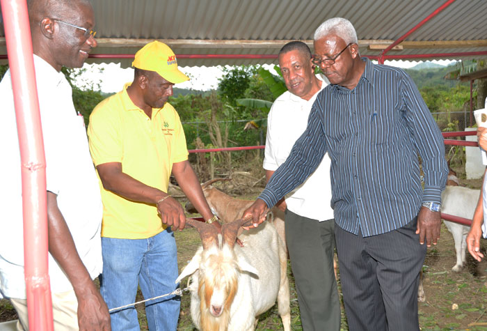 President of the St. James Associated Branch Societies of the Jamaica Agricultural Society (JAS), Montego Bay's Mayor, Councillor  Glendon Harris (2nd left) shows Custos of St. James, Hon. Ewan Corrodus (4th left),  one of the Nubian rams being raised by St. James livestock farmers, at the 31st staging of the Montpelier Agricultural and Industrial Show on Easter Monday (April 21),  in St James, under the theme: 'Grow what we Eat… Eat what we Grow'.  Sharing the moment are Chief Executive Officer of the JAS,  Mr.  Christopher Emanuel (left) and Regional Manager of the Rural Agricultural Development Authority (RADA), Mr. Ronald Robinson.
