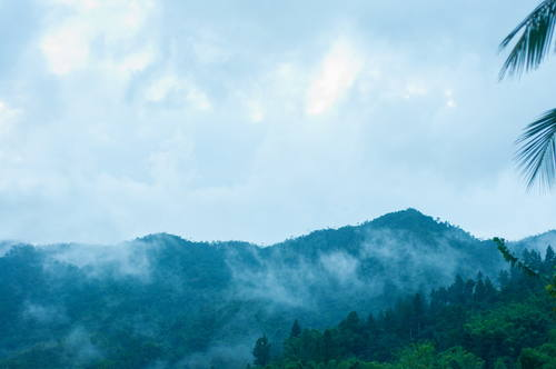 The cloud forests of the Blue and John Crow Mountains National Park are over 1,000m high.