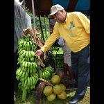 Portland Farmers Urged to Increase Banana Production