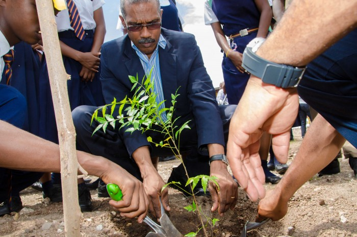 Chief Technical Director in the Ministry of Water, Land, Environment and Climate Change, Lt. Col. Oral Khan, plants a tree at the launch of National Tree Planting Day on Friday, (October 2) at the St. Andrew Technical High School located on Spanish Town Road. The annual exercise is spearheaded by the Forestry Department.